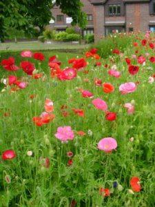 wildflowers_june09cc